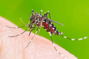 Muỗi aedes gây nên sốt xuất huyết