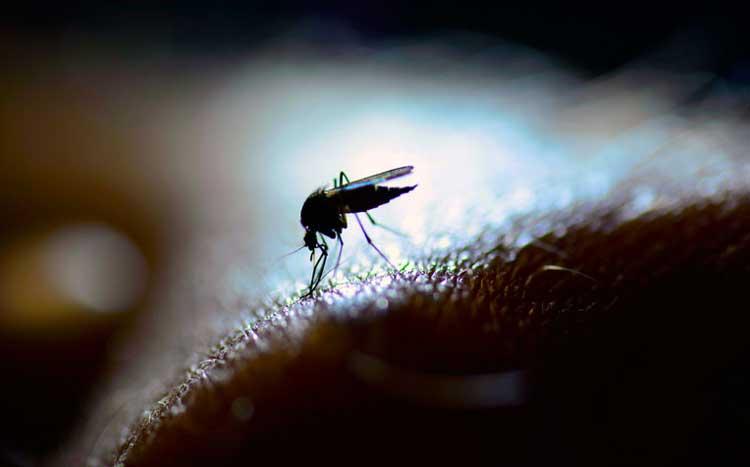 Theo CDC, mỗi năm có tới 400 triệu người bị nhiễm sốt xuất huyết.