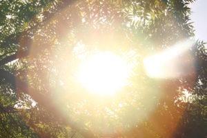 ánh sáng mặt trời dịu mát